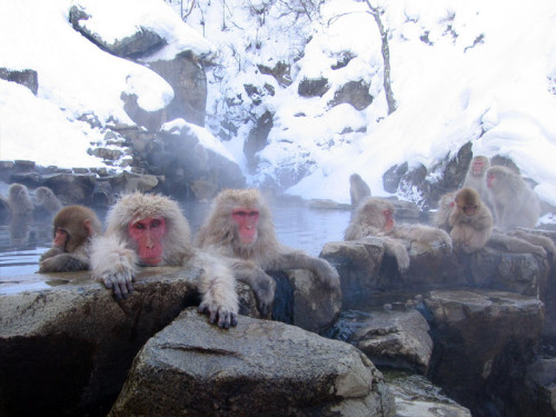 Jigokudani Hot Springs