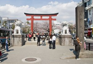 via https://en.wikipedia.org/wiki/Wakamiya_Ōji#/media/File:Cherry-Blossoms-Dankazura-Kamakura.jpg