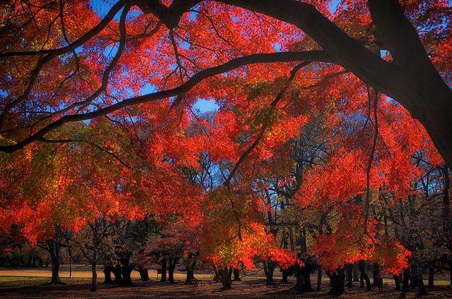 Tokyo fall Colors Kinuta Park